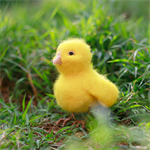 Beginner Easter Chick Needle Felting Kit -makes 1 Chick
