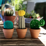 Miniature crochet cacti trio, cactus in a mini pot