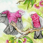 Pink and grey galah painting, fine art print 8.5 x 12 inch