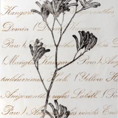 Original Kangaroo Paw Drypoint Artwork, Native Flower, Australian.