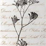 Original Kangaroo Paw Drypoint Artwork, Native Flower, Australian.