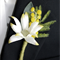 Buttonhole for Groom or Groomsman - Australian Native Flowers
