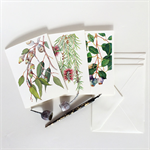 Australian flora mixed greeting card set: 3 cards & 3 white envelopes