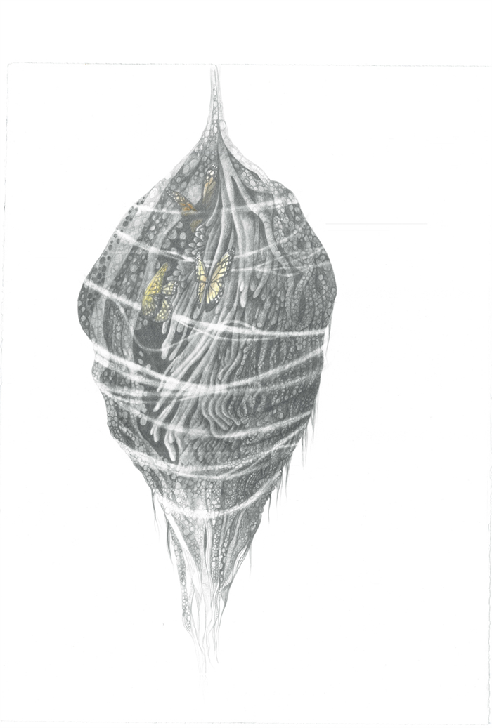 Butterfly Cocoon Drawing Butterfly Cocoon   ArT...