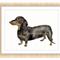 Dachshund Print, A4 Size Watercolor Dog