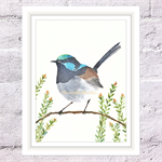 Superb Fairy Wren Print, A4 Size Watercolour Blue Wren