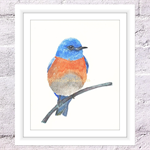 Bluebird Print, A4 Size Watercolor Bluebird