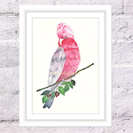 Galah Print, A4 Size Watercolour Rose Breasted Cockatoo
