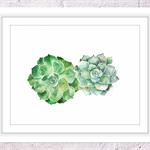 Succulents Print, A4 Size Watercolour Succulents