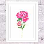 Peony Rose Print, A4 Size Watercolour Peony
