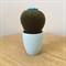 Crochet cactus with blue flower