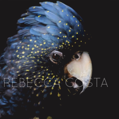 Print Size: A1 (23.4 x 33.1 in) Unique Wall Art, bird photo, Cockatoo picture