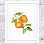 Tangerine Print, A4 Size Watercolour Tangerines, Kitchen Print