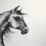 "Original charcoal horse art ""Trade Wind"" by April Spadina"