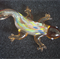 Lampwork Gecko Light - Sun Catcher
