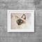 "Ragdoll Cat, Print, 8' x 10"" Watercolour, Cat painting"