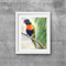 "Lorikeet, Print, 8"" x 10"" Watercolour, Australian Birds"