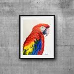 "Macaw, Print, 8' x 10"" Coloured Pencil, Parrot"
