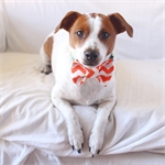 Pet Bow Tie S/M/L