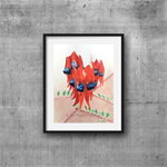 "Sturt Desert Pea, Print, 8' x 10"" Coloured Pencil, Australian Flower"