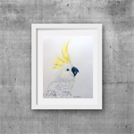 "Cockatoo, Print, 8' x 10"" Coloured Pencil, Australian Birds,"