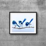 "Blue Wrens, Print, 8' x 10"" Coloured Pencil, Australian Birds"