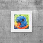 "Lorikeet, Print, 8"" x 8"" Coloured Pencil, Australian Birds,"