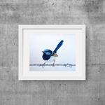 "Blue Wren, Print, 8' x 10"" Coloured Pencil, Australian Birds,"