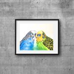 "Budgies, Print, 8' x 10"" Coloured Pencil, Australian Birds, Budgerigars"