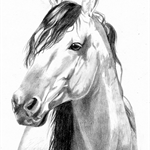 Custom Horse Pet Portrait Drawing in Graphite From Your Photograph