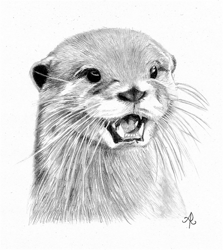 Custom Otter Pet Portrait Drawing in Graphite From Your ...