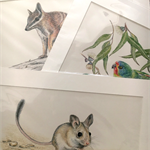 "3 x Australian Wildlife Art Prints 12""x 8"" wall art with matt frame board"