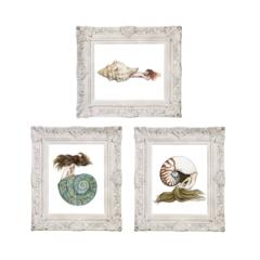 Set of 3 Nautilus Triton & Jade Turbo Shell Mermaid Art Prints 8x10