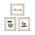 Set of 3 Nautilus Triton & Jade Turbo Shell Mermaid Art Prints 8x10