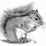 Custom Squirrel Pet Portrait Drawing in Graphite From Your Photograph