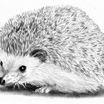 Custom Hedgehog Pet Portrait Drawing in Graphite From Your Photograph