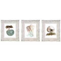 8x10 Set of 3 Nautilus Lightning Whelk & Jade Turbo Shell Mermaid Art Prints