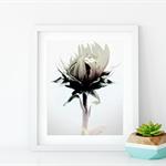 Flora, single flower.
