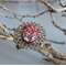 Silver filigree ring with red stone