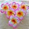 1/2 Price Sale DIY 6 x Plumeria cake flowers