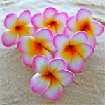 1/2 Price Sale DIY 6 x Plumeria cake flowers