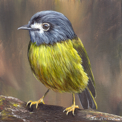 Pale Yellow Robin, Original bird painting, bird art, Australian wildlife bird,