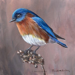 Eastern Bluebird, Original bird painting, bird art, wildlife painting, wall art