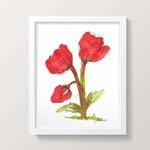 Red Poppy Watercolour Painting Original Wall Art