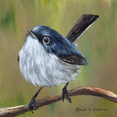 Blue Gray Gnatcatcher, Original bird painting, bird art, wildlife painting,