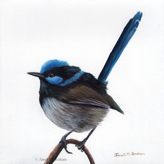Superb Fairy Wren, Original Acrylic bird painting,  Australian wildlife bird art