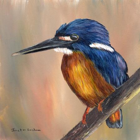 Azure Kingfisher, Original bird painting, bird art, Australian wildlife bird,