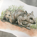 Hairy-nosed Wombats  greeting card Australian wildlife art
