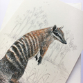 Numbat portrait greeting card Australian wildlife art