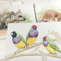 Gouldian Finches  greeting card Australian wildlife art colourful birds